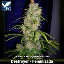 Destroyer – Feminizada – Cannabiogen Seeds