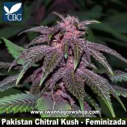 Pakistan Chitral Kush