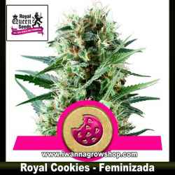 Royal Cookies – Feminizada – Royal Queen