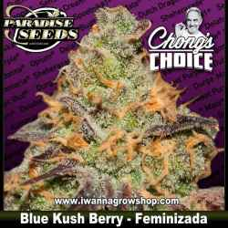 Blue Kush Berry