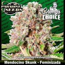 Mendocino Skunk - Feminizada - Paradise Seeds