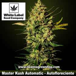 Master Kush Automatic – White Label – Autofloreciente