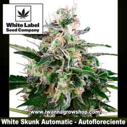 White Skunk Automatic – Autofloreciente