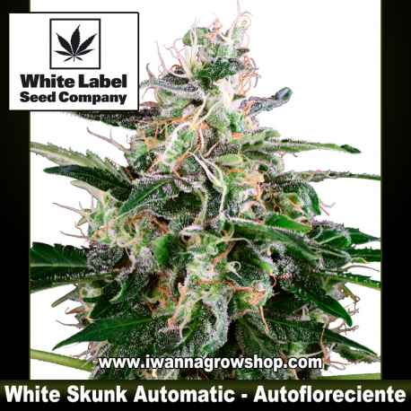 White Skunk Automatic