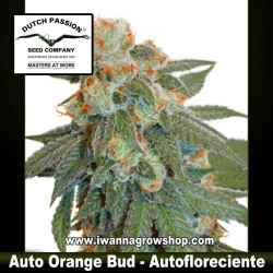 Auto Orange Bud – Autofloreciente – Dutch Passion