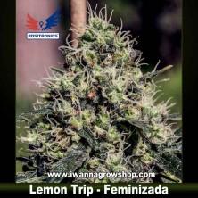 Lemon Trip – Feminizada – Positronics Seeds