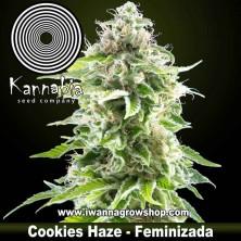 Cookies Haze – Feminizada – Kannabia Seeds