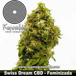 Swiss Dream CBD