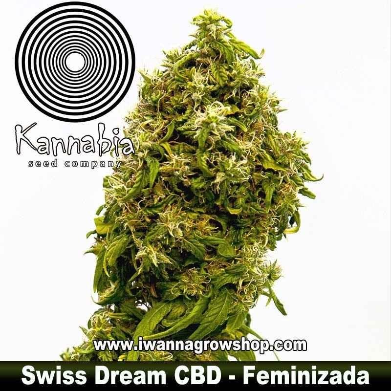 Swiss Dream CBD