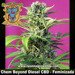 Chem Beyond Diesel CBD – Feminizada – Sweet Seeds