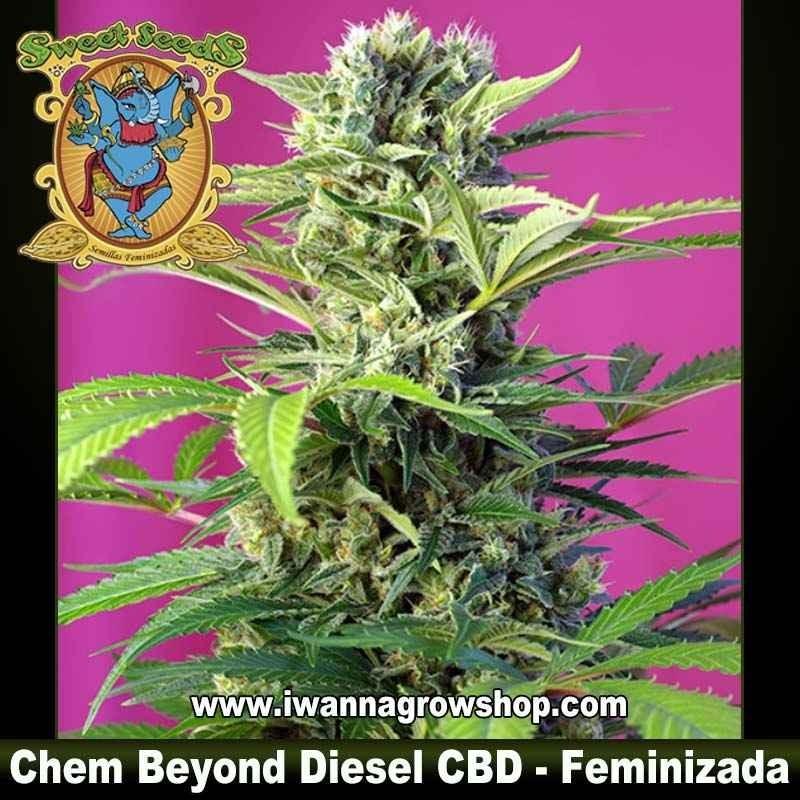 Chem Beyond Diesel CBD