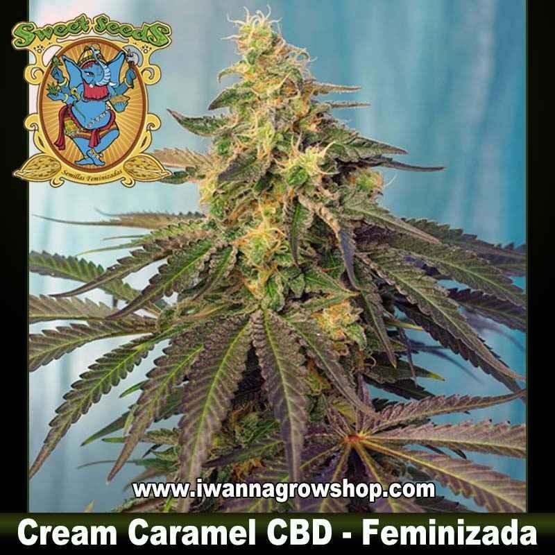 Cream Caramel CBD