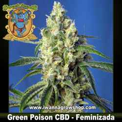 Green Poison CBD – Feminizada – Sweet Seeds