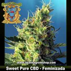Sweet Pure CBD – Feminizada – Sweet Seeds