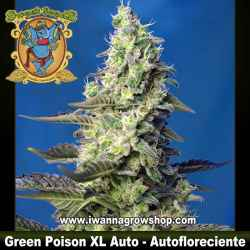 Green Poison XL Auto – Autofloreciente – Sweet Seeds