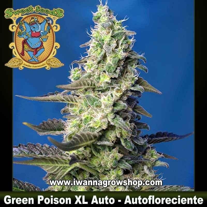Green Poison XL Auto