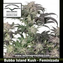 Bubba Island Kush