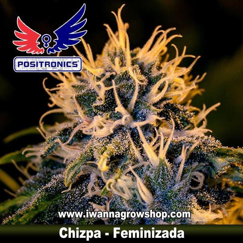 Chizpa – Feminizada – Positronics