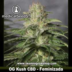 OG Kush CBD – Feminizada – Medical Seeds