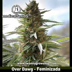 Over Dawg – Feminizada – Medical Seeds