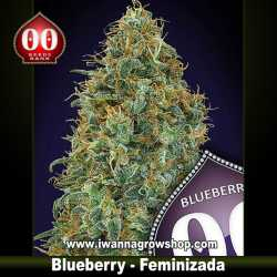 Blueberry – Feminizada – 00 Seeds