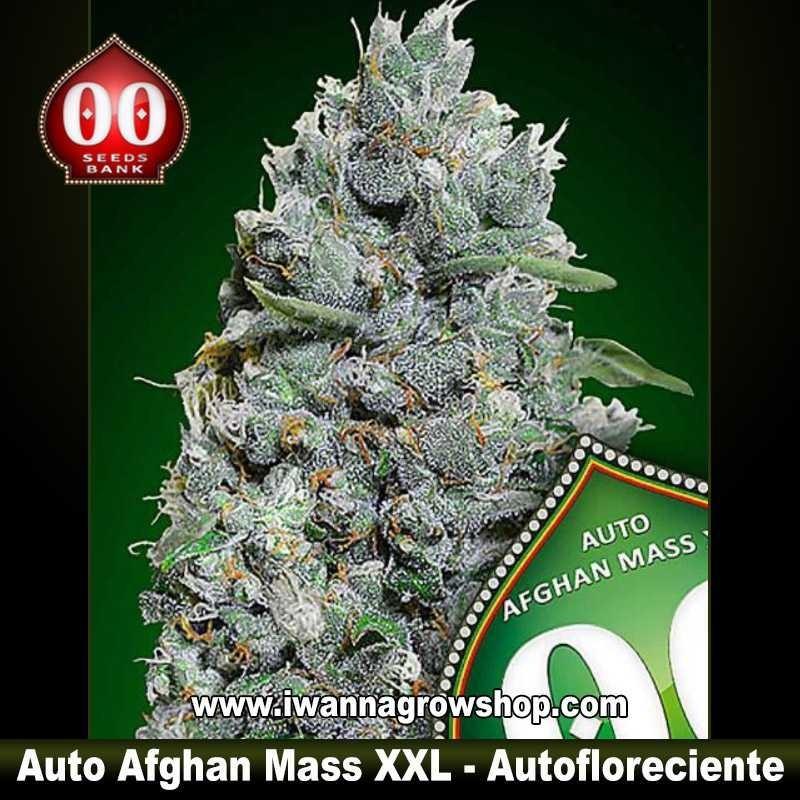 Auto Afghan Mass XXL – Feminizada – 00 Seeds