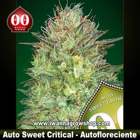 Auto Sweet Critical