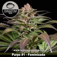 Purps 1 – Feminizada – Dinafem Seeds
