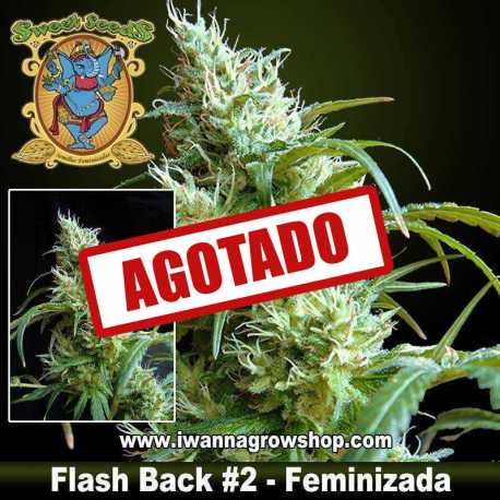 Flash Back 2 feminizada - Sweet Seeds - 3, 5 y 10 u.