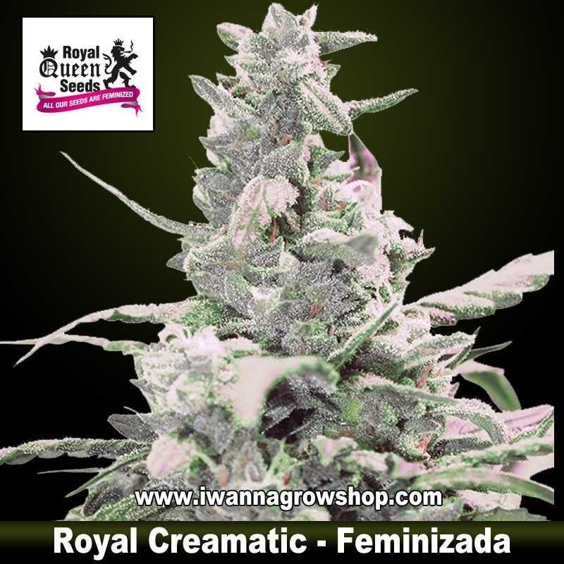 Royal Crematic