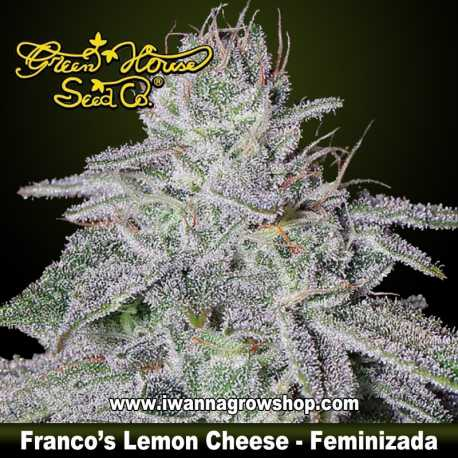 Franco's Lemon Cheese – Feminizada