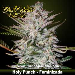 Holy Punch – Feminizada