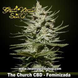 The Church CBD – Feminizada