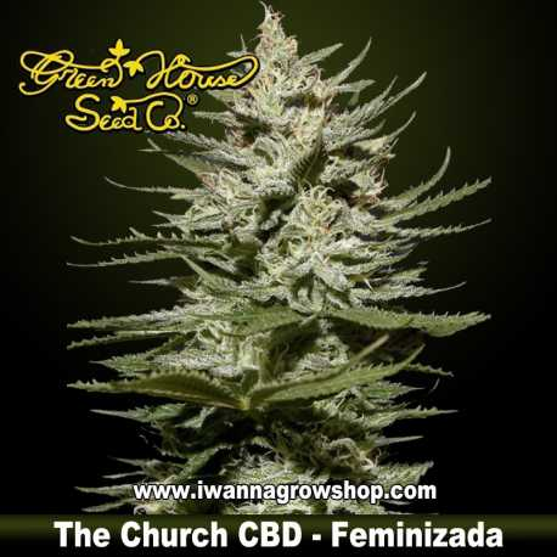 The Church CBD
