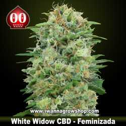 White Widow CBD – Feminizada