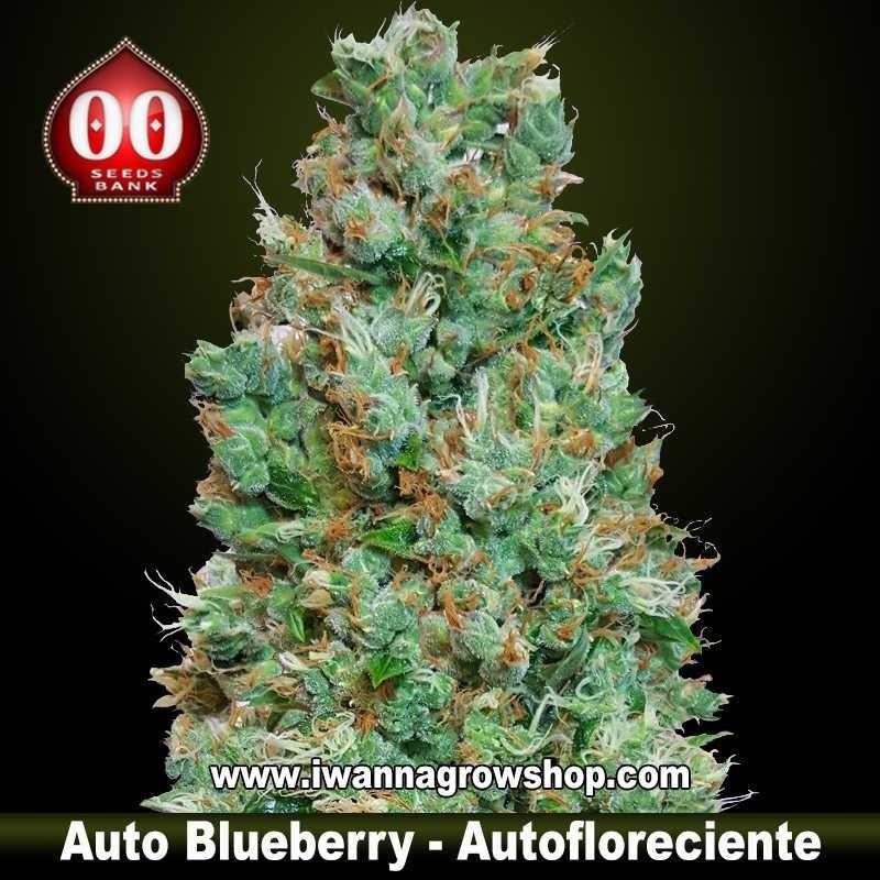 Auto Blueberry