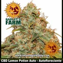 CBD Lemon Potion Auto – Autofloreciente