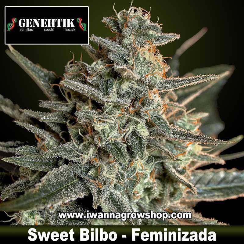Sweet Bilbo – Feminizada