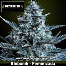 Blubonik – Feminizada