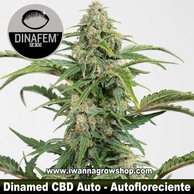 Dinamed CBD Auto – Autofloreciente