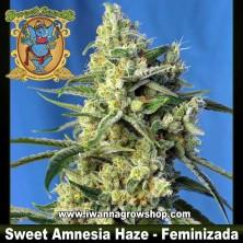 Sweet Amnesia Haze – Feminizada