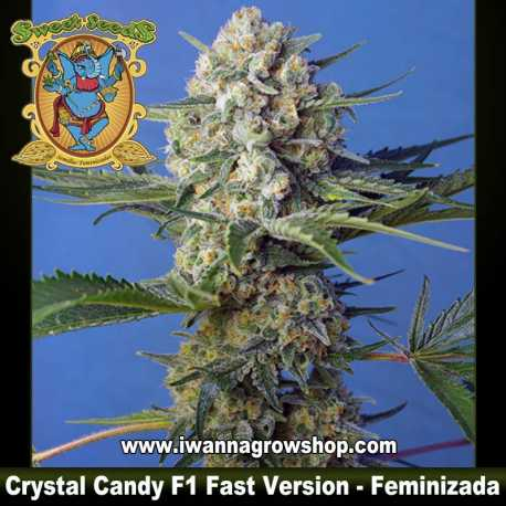 Crystal Candy F1 Fast Version – Feminizada