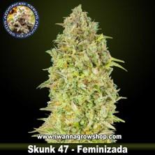 Skunk 47 – Feminizada