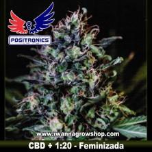 CBD + 1:20 – Feminizada