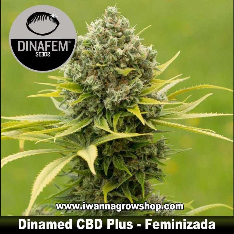 Dinamed CBD Plus