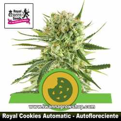 Royal Cookies Automatic – Autofloreciente