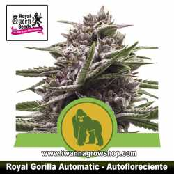 Royal Gorilla Automatic – Autofloreciente