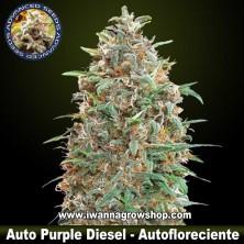 Auto Purple Diesel – Autofloreciente