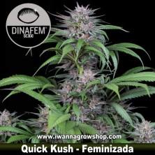 Quick Kush – Feminizada