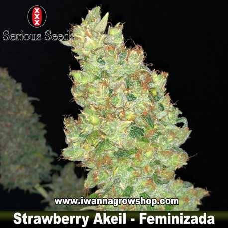 Strawberry Akeil – Feminizada